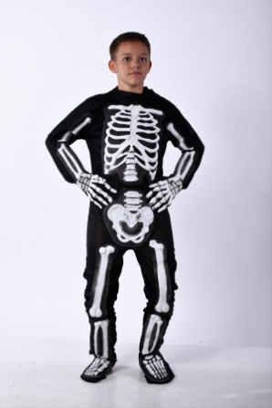 Скелет модель 3 подростковый